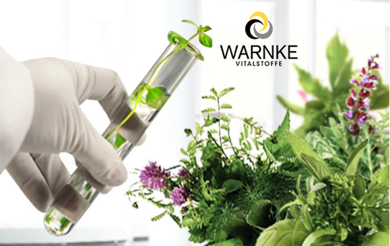 Warnke GinkGo and Mehr có các thành phần hoàn toàn từ thiên nhiên.