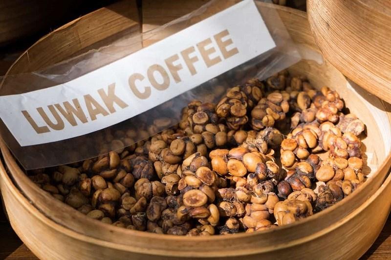 Cà phê chồn Kopi Luwak